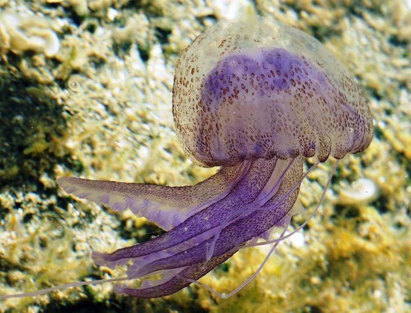 медузы в испании